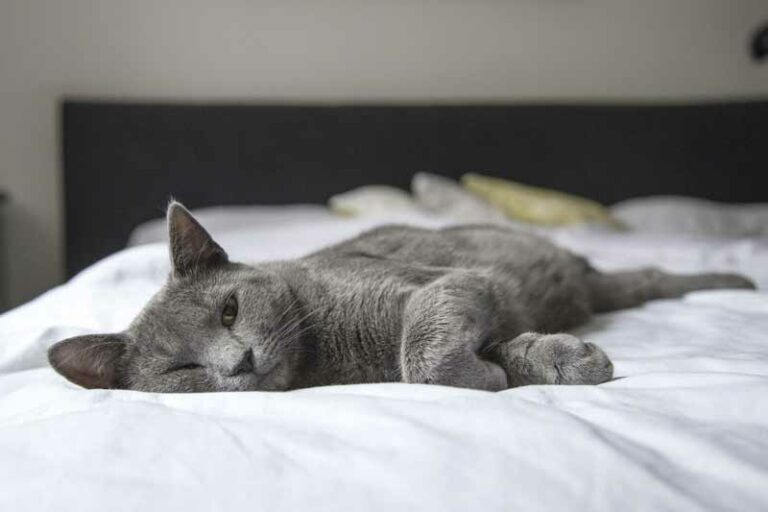 How to Keep Cats Off the Bed? Simple Tricks Explained